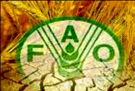 فائو نگران افزایش قیمت غلات در بازارهای جهانی است