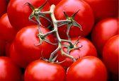 وزارت کشاورزی محصولات گوجه فرنگی کاران را خریداری می کنند