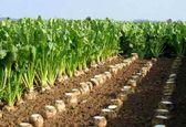 تشکیل شورای قیمت گذاری محصولات استراتژیک به دستور وزیر کشاورزی/ اصلاح نرخ چغندر قند در نخستین نشست شورای قیمتگذاری