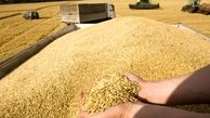 رشد 3.25 دلاری گندم در بازار های جهانی