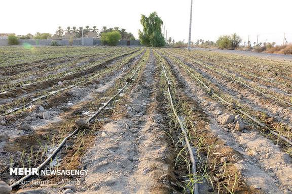 جهش تولید در بخش کشاورزی اتفاق افتاد