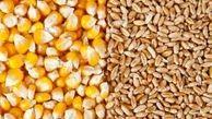 صعود قیمت گندم و ذرت/ کاهش ۴۶ درصدی تولید گندم در امریکا