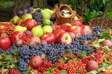 افزایش 70 درصدی قیمت میوه!