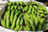 قیمت انواع میوه و صیفیجات در بازار / تولید 23 میلیون تن انواع محصولات باغبانی در کشور