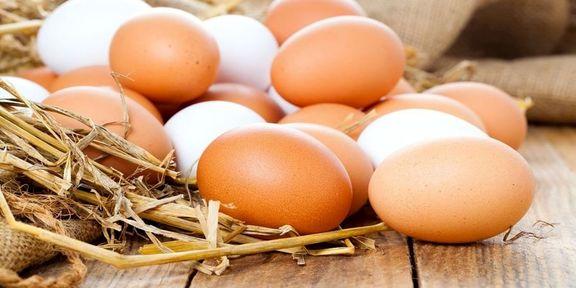 قیمت هر شانه تخم مرغ 28 هزار تومان اعلام شد
