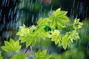 جبران کسری آب سال زراعی قم با بارشهای اخیر