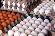 جدیدترین قیمت هرشانه تخم مرغ در بازار چند؟