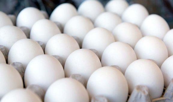 صادرات تخم مرغ متوقف نشده است
