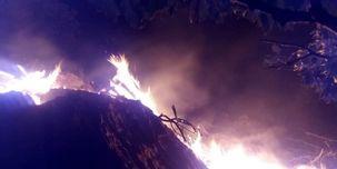 درختان کوه الوند طعمه حریق شدند