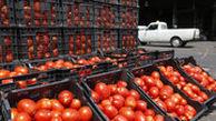 قیمت گوجهفرنگی روند کاهشی به خود گرفت