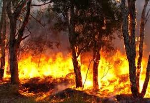 تا کنون چند آتش سوزی در کشور اتفاق افتاده است