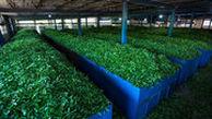 ایران به 12 کشور جهان چای صادر کرد