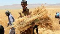 در یکسال گذشته حدود 14 میلیون تن گندم تولید شد