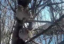 یخ زدن پرندگان روی درخت از سرمای کم سابقه خلخال (اردبیل) + فیلم