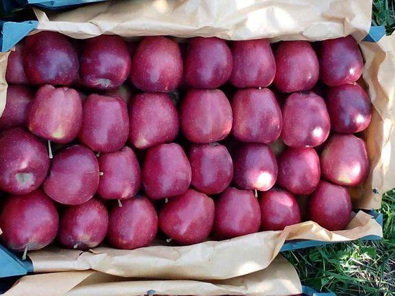 وزارت صنعت شرایط صادرات سیب درختی را اعلام کرد